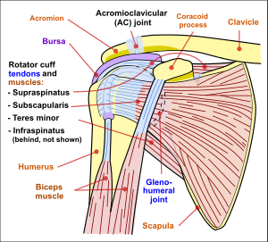 Shoulder Joint Pain And Physiotherapy Exercise